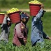 Migrant Workers Act Forms
